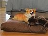 The Organic Terra Dog Pet Bed from Abundant Earth