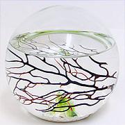 EcoSphere Sphere Shape