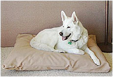 Reyna Sue posing on her Abundant Earth Organic Pet Bed!